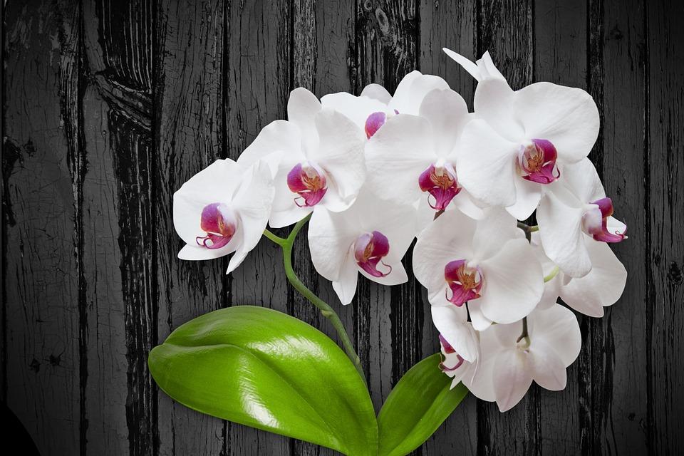 flower-1027570_960_720
