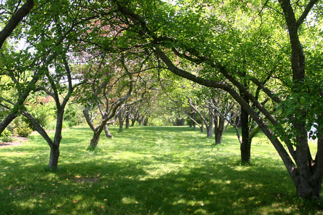littlefield_garden_trees