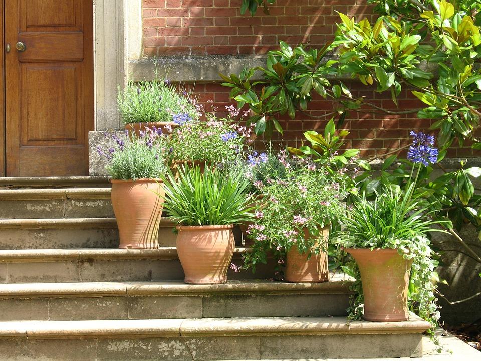 Terracotta Plant Pot Flowers Steps Pots Plants