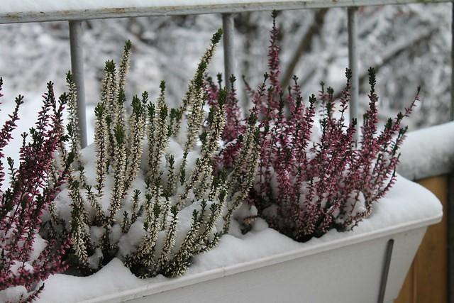 Zima Ogród Balkon Zielony